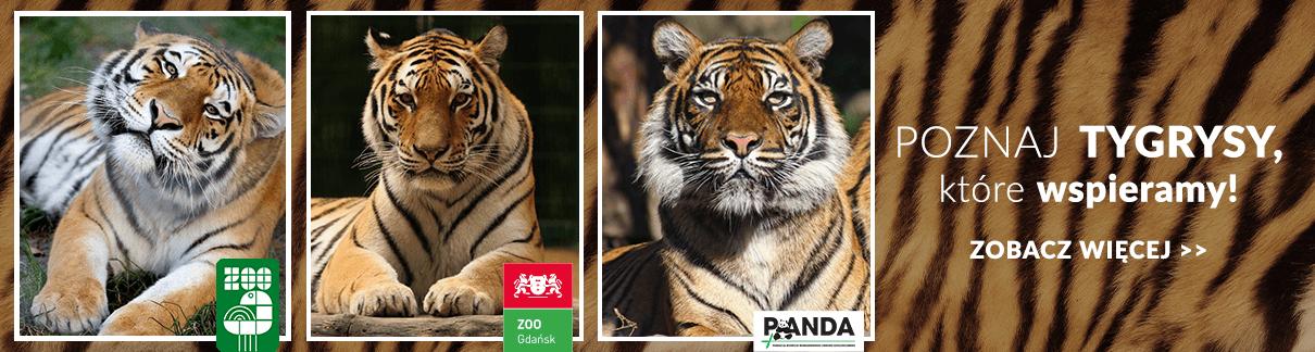 Homla kocha zwierzęta - wspieramy tygrysy